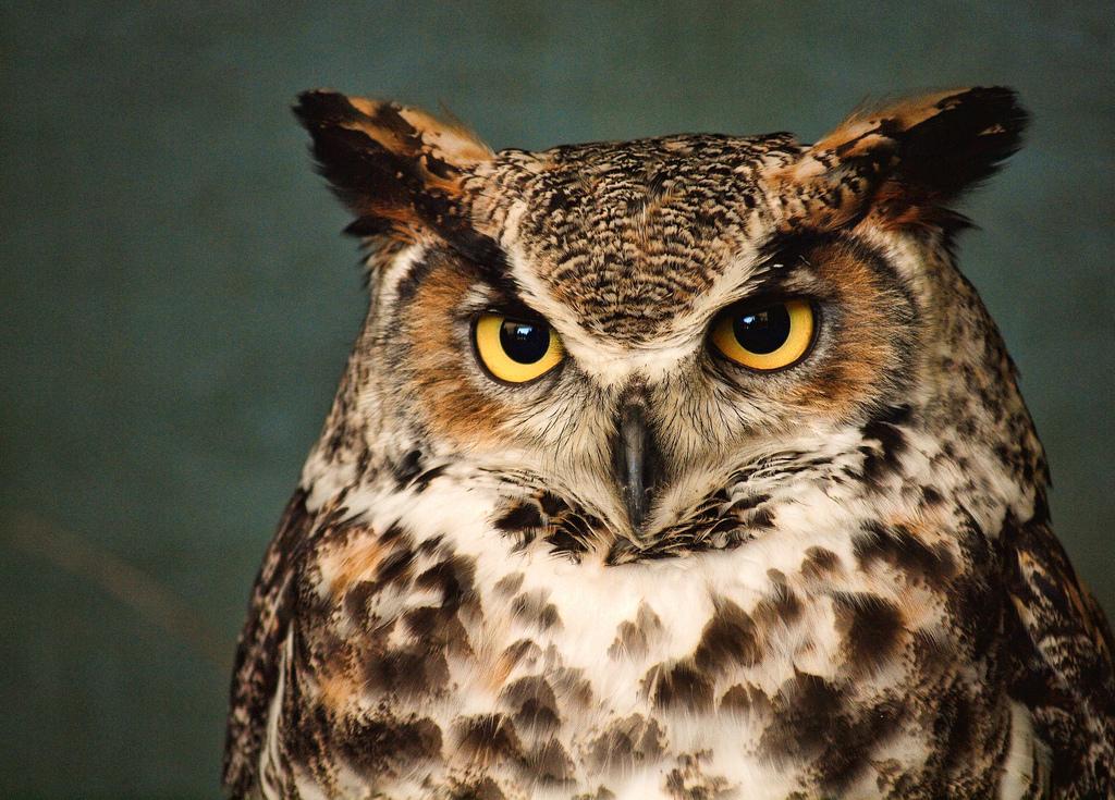 Owl Prowl at Chinkapin Bluffs